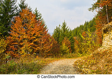 Dirt forest road in autumn