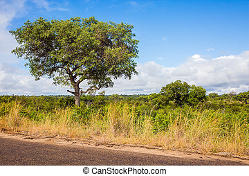The famous Kruger Park. South Africa - Dirt narrow road for ...