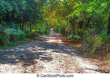 Dirt path in Burgos forest