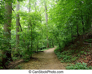 Dirt Path leading downwards through the Forest