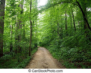 Dirt Path leading upwards through the Forest