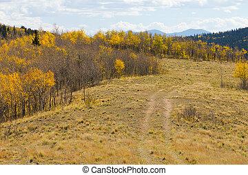 Dirt Path Through Fall Aspen Forest