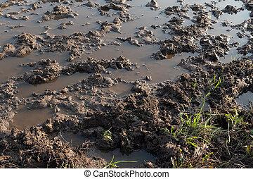 Dirt road after spring rain, close up
