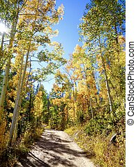 Dirt road and fall colors