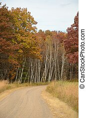 Dirt Road and Fall Trees