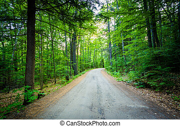Dirt road at Ahern State Park, in Laconia, New Hampshire.