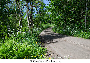 Dirt road at summer surrounded of green vegetation