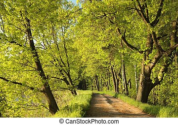 Dirt road between the spring trees.