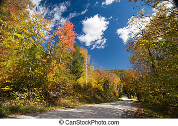 Dirt road crossing a colorful fall forest
