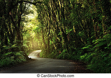 Dirt road going through thick, lush jungle