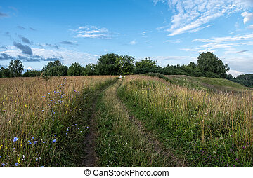 Dirt road going up the meadow overgrown with tall grass.