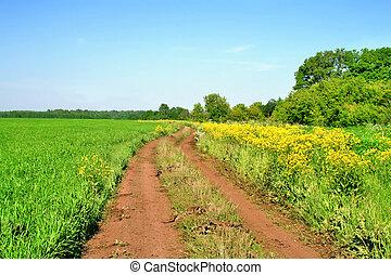 Dirt road - Gravel dirt road in a bright green grass