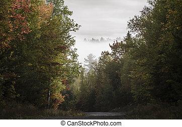 Dirt road hill fog foliage