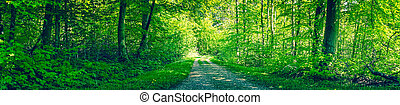 Dirt road in a green forest panorama