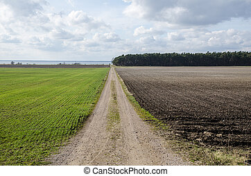 Dirt road in a rural landscpae - Springtime at a rural...