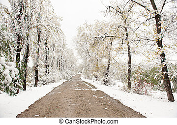 dirt road in a winter park