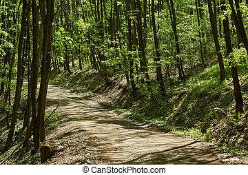 Dirt road in an oak forest