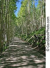 vertical image of a dirt road passing through an aspen grove with dappled sunlight