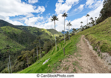 Dirt Road in Colombia