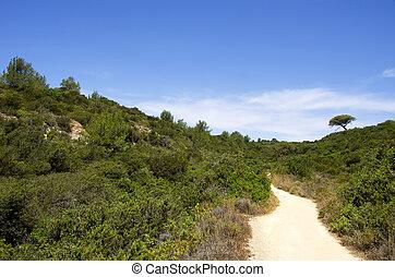 dirt road in field of  Algarve, Portugal