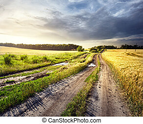 Dirt road in field of yellow wheat under cloudy sky