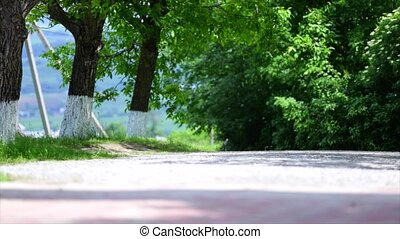 dirt road in green meadow and trees on sky background