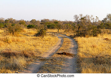 Dirt road in South African Game Reserve - Dirt road and ...