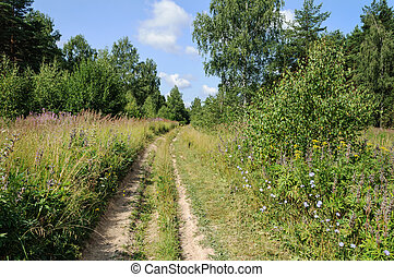 Dirt road in summer forest