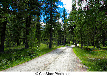 Dirt road in the middle of a forest in the Alps