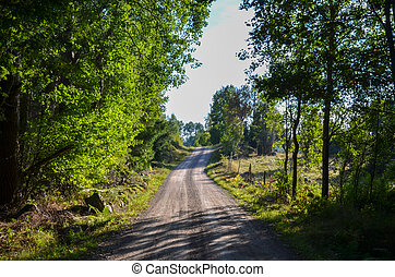 Dirt road in the woods at the province Smaland in Sweden.