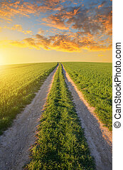 Dirt road in wheat field at sunset.