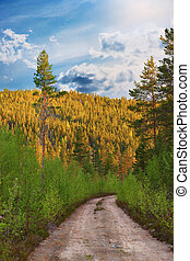 dirt road in wilderness area with conifer trees in bright...