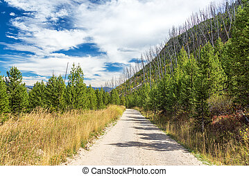 Dirt Road in Yellowstone National Park