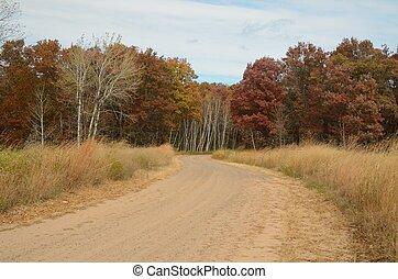 Dirt Road Leading Through Woods