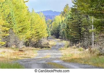 Dirt road Maine woods