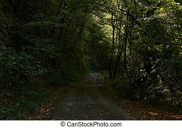 dirt road on a steep slope in a wooded mountainous area