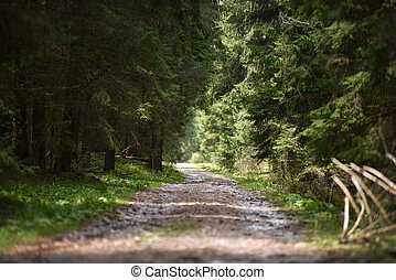 Dirt road perspective in the forest