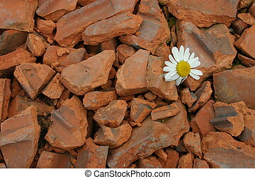 Dirt road - Brick crushed stone way with daisy