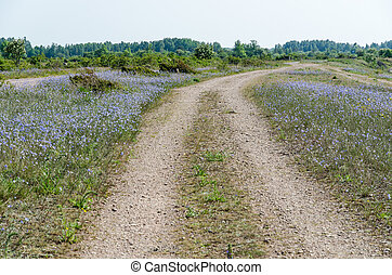 Dirt road surrounded of blue flowers