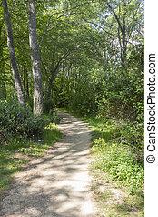 dirt road through a forest