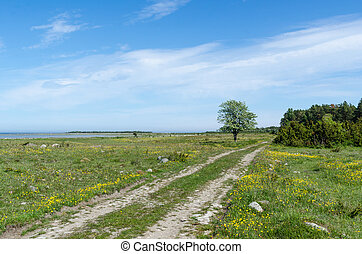 Dirt road through a green grassland with lots of yellow...