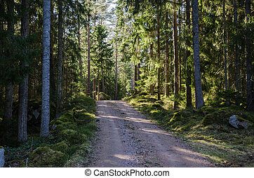 Dirt road through a shiny forest