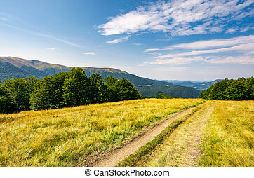 dirt road through alpine meadow among forest - dirt road...