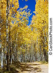 Dirt Road Through Colorado Aspen Forest