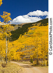 Dirt Road Through Colorado Aspen Forest In Fall