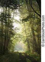 Dirt road through deciduous forest
