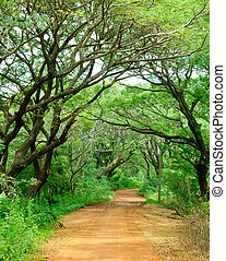 Dirt road through dense rainforest in Sri Lanka
