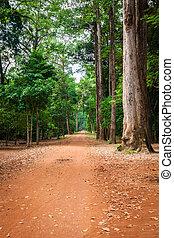 Dirt road through dense rainforest in Cambodia