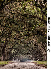 Dirt Road Through Gate Under Live Oak