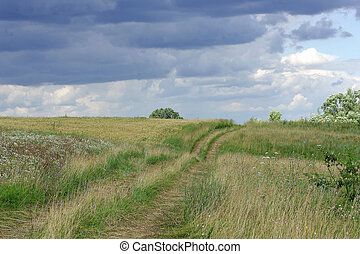 Dirt road through meadow.